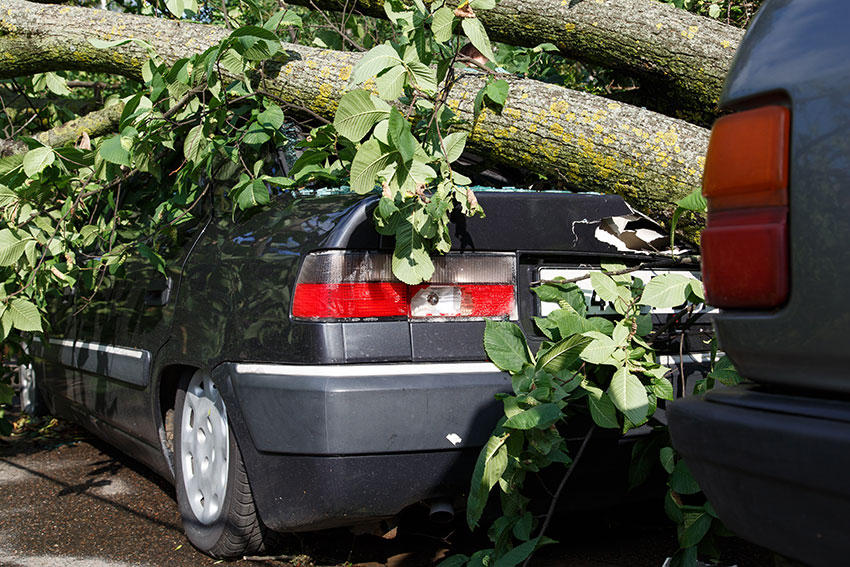 tree-fall-down-on-car