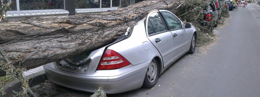 Fallen Tree Auto Forward